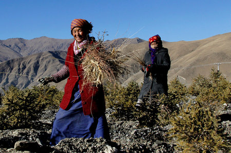 Ecological Advances on Qinghai-Tibet Plateau Help Farmers